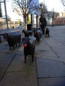 Sheep Belfast